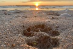 Beach-sunrise